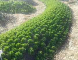 Permaculture et jardin potager, on en parle ?
