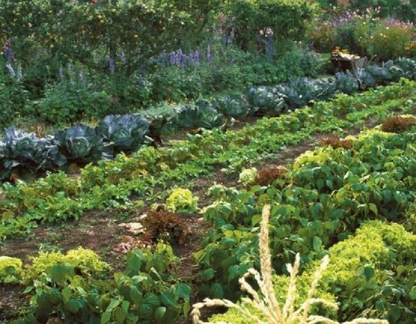 Planifier le potager rotations et associations en 5 tapes for Planifier son jardin
