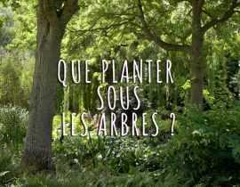Que planter sous mes arbres ?