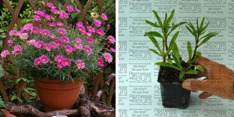 Jardinerie en ligne faut il acheter ses plantes sur for Achat de plantes sur internet