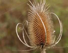 Jardin naturel, 5 plantes sauvages remarquables