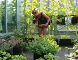 Potager au balcon : 15 mini-légumes parfaitement adaptés