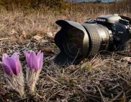 De l'intérêt de photographier son jardin