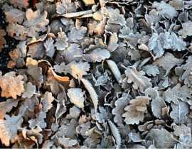 Le potager en hiver : 4 gestes pour protéger le sol et préparer la terre
