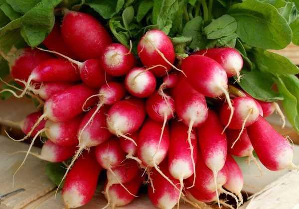 10 radis de printemps et d'été, à semer presque toute l'année