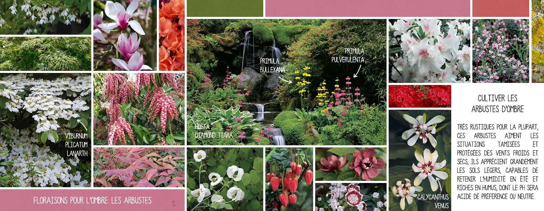 floraisons pour l 39 ombre les arbustes promesse de fleurs. Black Bedroom Furniture Sets. Home Design Ideas