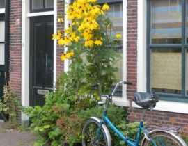 Aux Pays-Bas, l'art des trottoirs jardinés