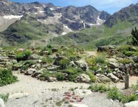 Le jardin botanique alpin du Lautaret