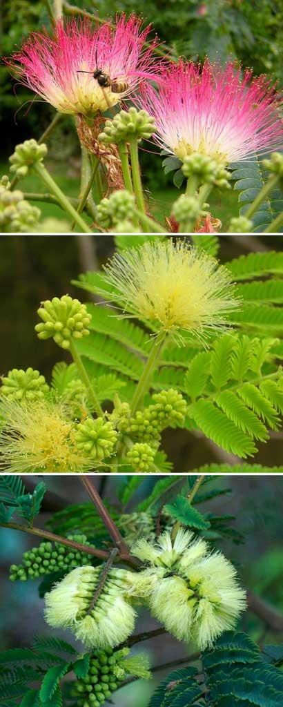 nom scientifique des plantes et leurs familles pdf