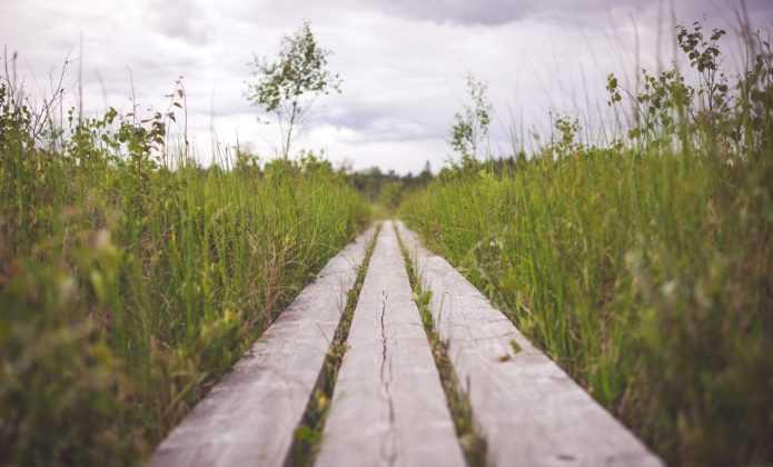 Avoir un beau jardin : le but et le chemin