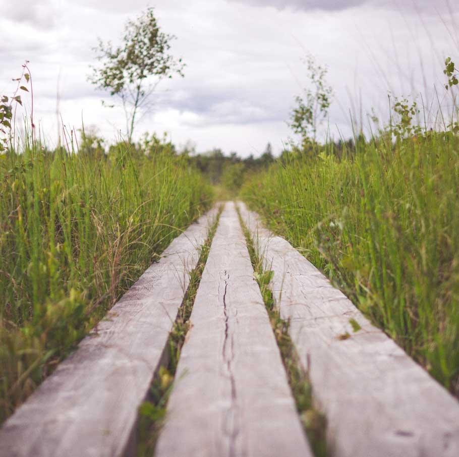 Avoir un beau jardin le but et le chemin humeur de for Avoir un beau jardin