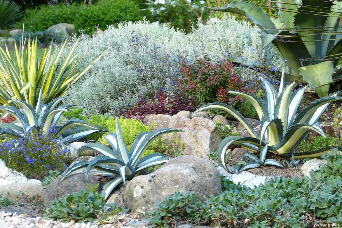 agave planter cultiver entretenir nos conseils promesse de fleurs. Black Bedroom Furniture Sets. Home Design Ideas