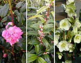 En fleurs dans nos serres : mes coups de cœur de février