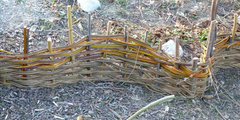 Vannerie : l\'art de tresser les plantes