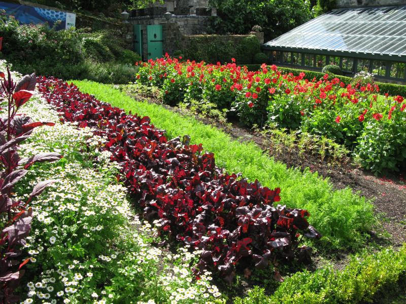 la carotte la semer la cultiver la r colter au potager promesse de fleurs. Black Bedroom Furniture Sets. Home Design Ideas