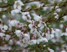 Avril au jardin : l'hymne à la joie !