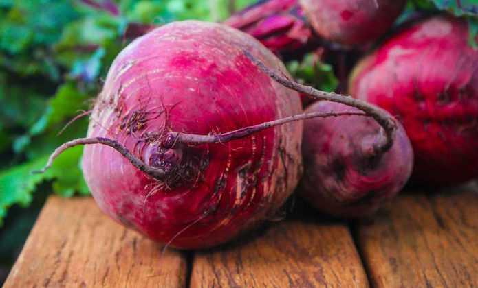 Betterave : semis, plantation, culture et récolte