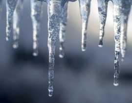 Vague de froid : 3 choses simples à faire au jardin après un gel sévère