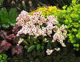 Plantes d'ombre : 5 nouvelles vivaces, faciles à cultiver