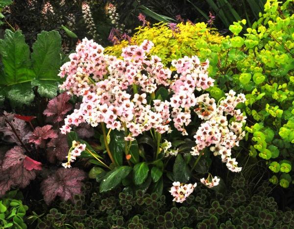 Plantes d 39 ombre 5 nouvelles vivaces faciles cultiver au jardin - Plantes vivaces d ombre ...
