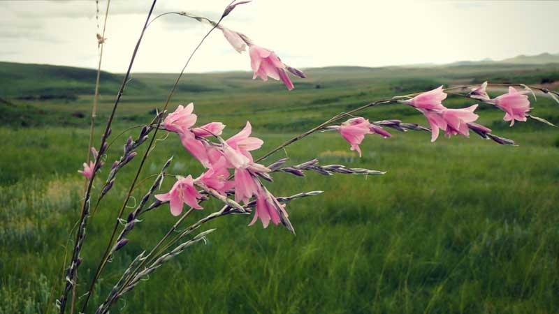 Voyage Botanique En Afrique Du Sud Blog Promesse De Fleurs