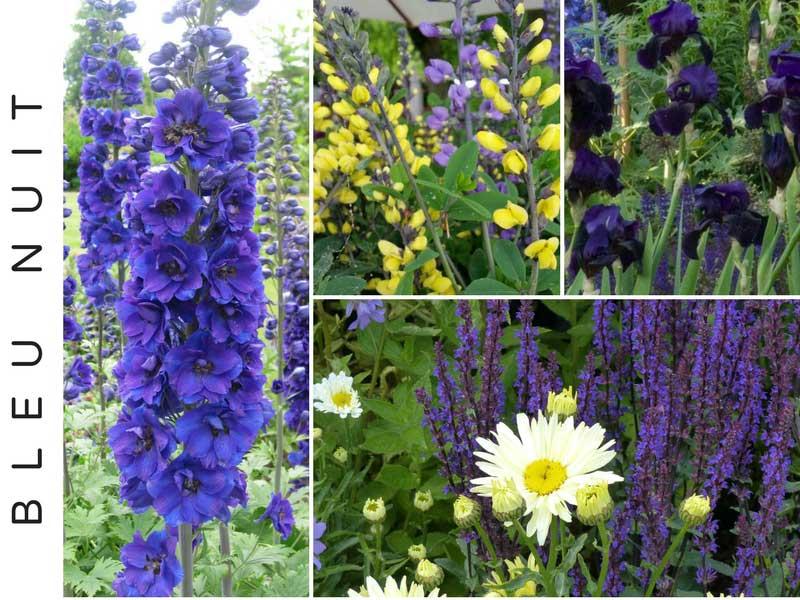 plantes vivaces invitez la couleur au jardin id es d 39 associations blog promesse de fleurs. Black Bedroom Furniture Sets. Home Design Ideas