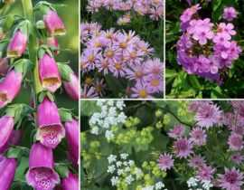 Plantes vivaces, invitez la couleur au jardin !