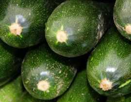 Courgette : la semer, la planter, la cultiver au potager