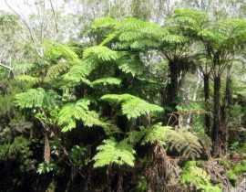 Voyage à la Réunion (1ère partie)