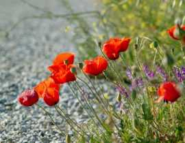 Panne de tondeuse : de l'intérêt de laisser pousser l'herbe
