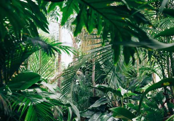 10 plantes exotiques et rustiques pour jardin Jungle