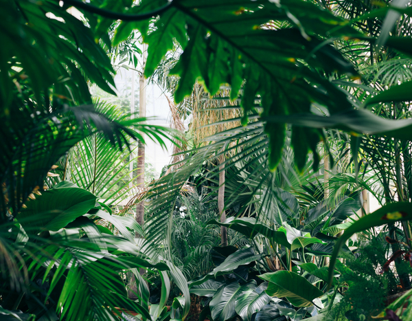 10 plantes exotiques et rustiques pour jardin jungle blog promesse de fleurs. Black Bedroom Furniture Sets. Home Design Ideas