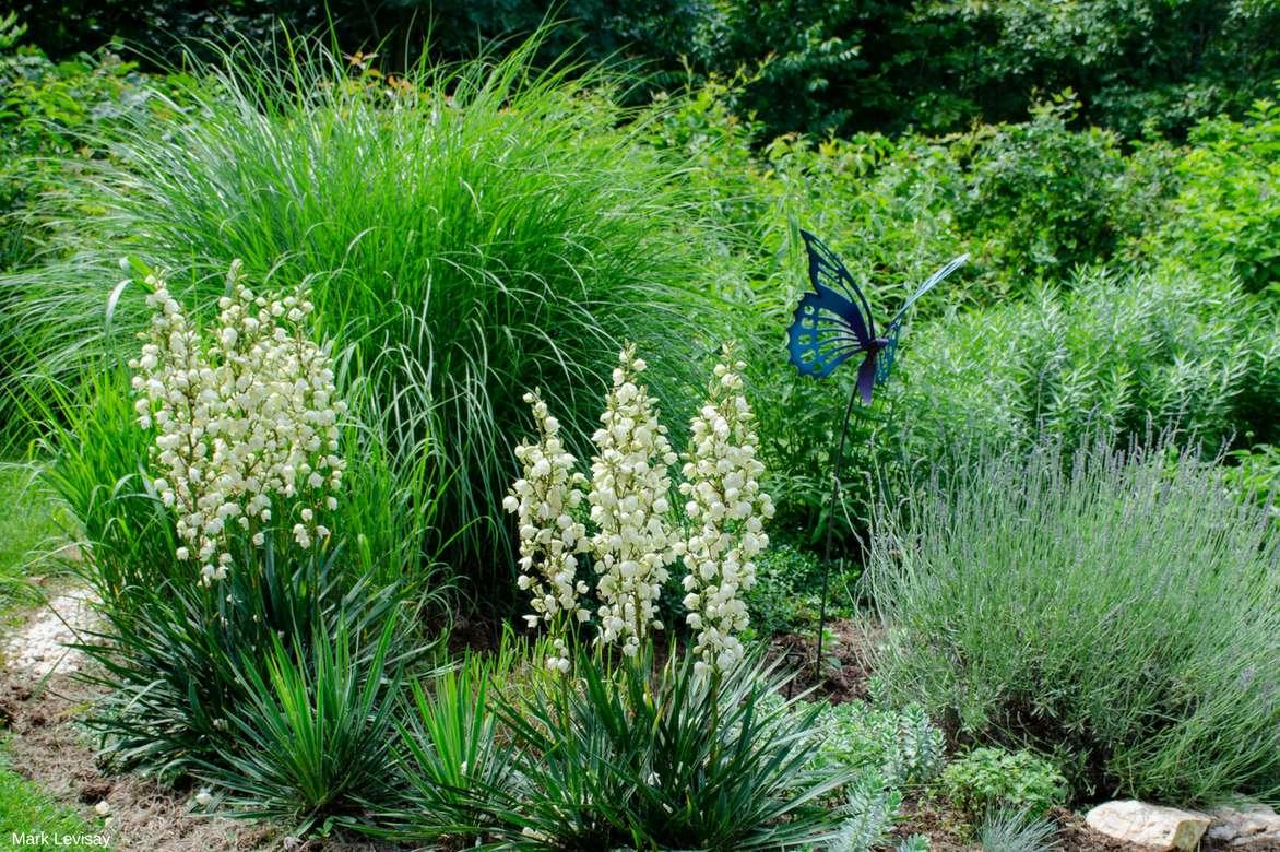 yucca d 39 ext rieur choix plantation entretien en pot ou au jardin nos conseils promesse. Black Bedroom Furniture Sets. Home Design Ideas