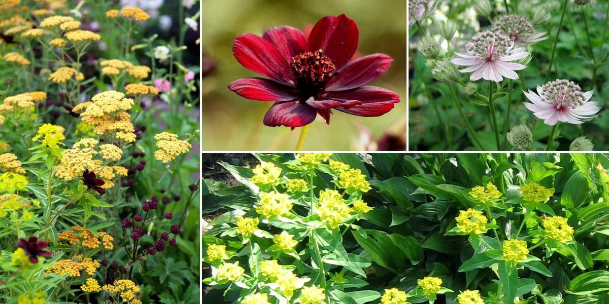Une idée d'association pour les euphorbes - Jardin naturaliste