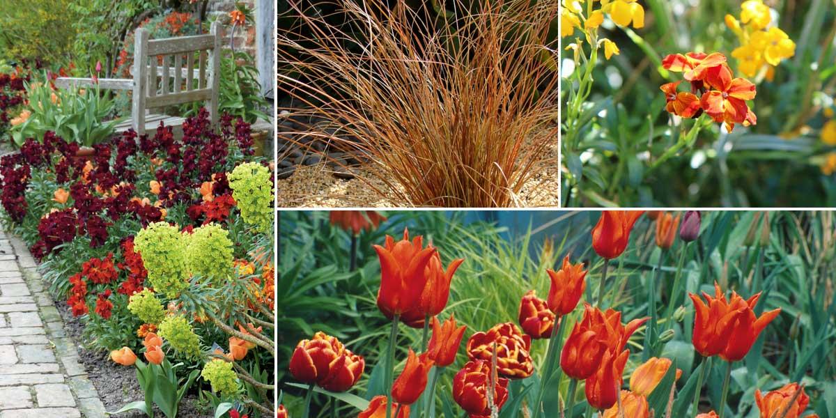 Une association au jardin avec des giroflées, euphorbes, carex et tulipes