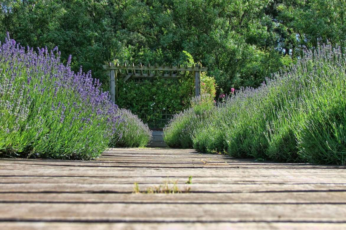Lavande En Pot Et Au Jardin Planter Cultiver Tailler Promesse
