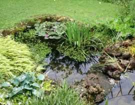 Les bassins de mon jardin et leur création