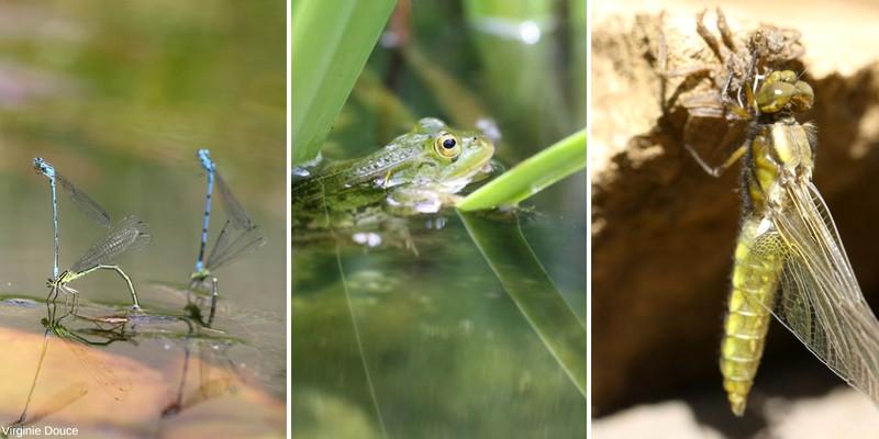 faune du bassin de jardin