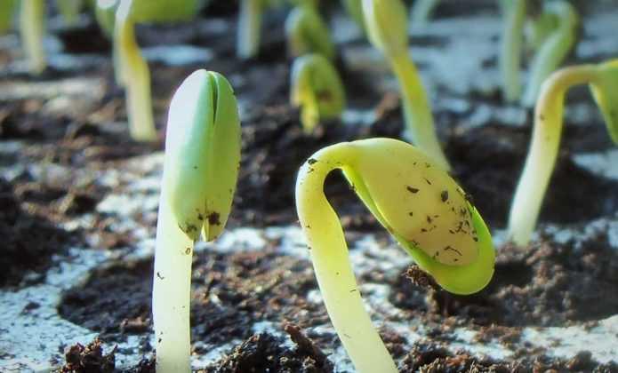 Semer des graines : tout ce qu'il faut savoir, nos conseils et astuces