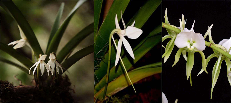 Exotique fleurs Rare semences rares jardin balcon plante saisir Sauge