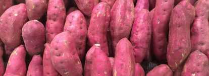 patate douce ipomoea batatas tubercule pour potager. Black Bedroom Furniture Sets. Home Design Ideas