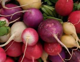 Le radis : semer, cultiver, récolter