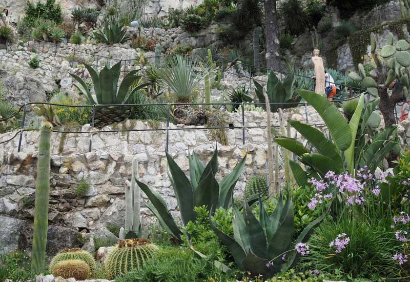 Le jardin exotique d'Eze, avec des cactus, agaves et tulbaghia