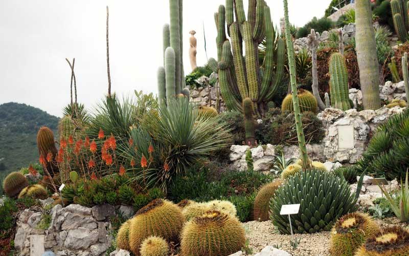 Visite au jardin exotique d\'Eze - Blog Promesse de fleurs