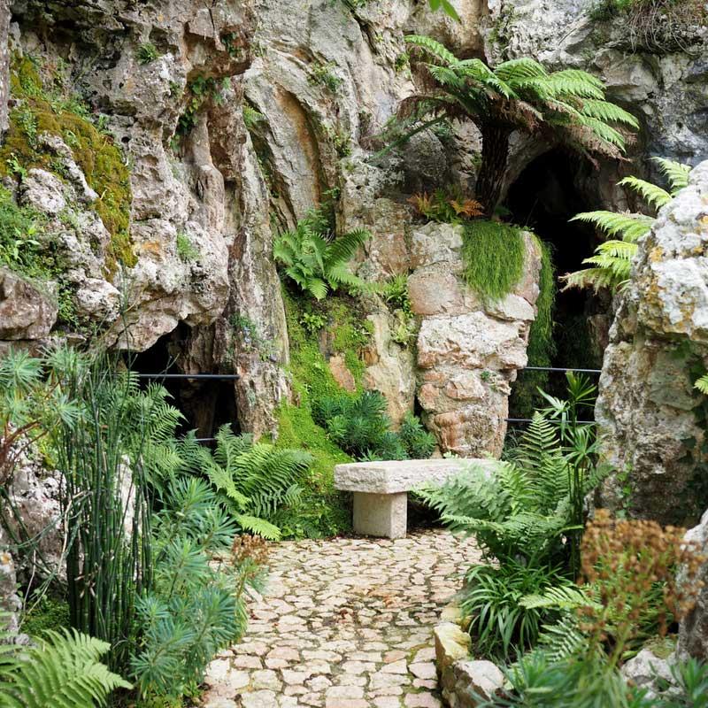 Le jardin exotique d'Eze, avec des fougères, prêles, euphorbes...