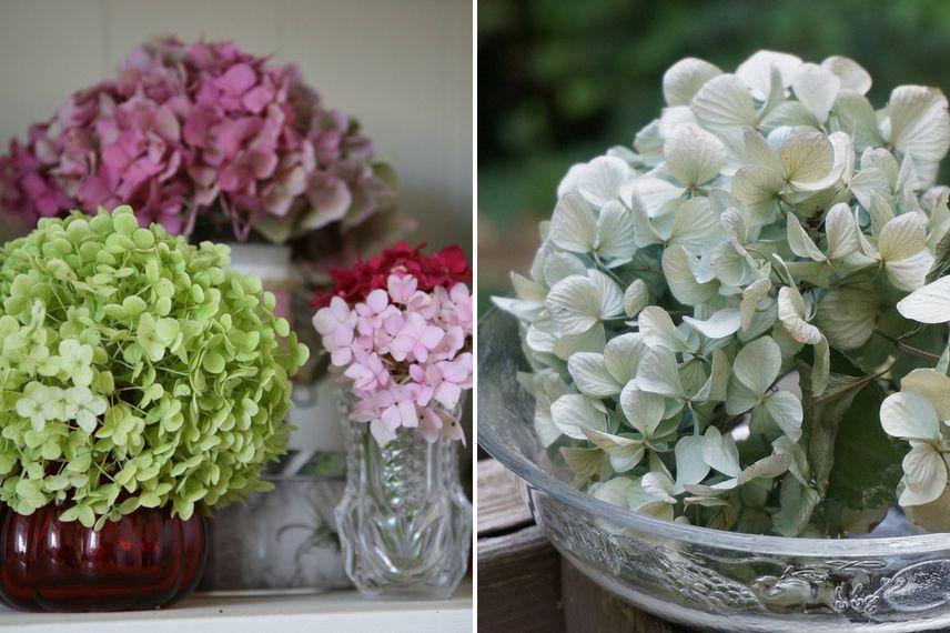 Comment Faire Secher Les Fleurs D Hortensia Tutoriel Promesse De
