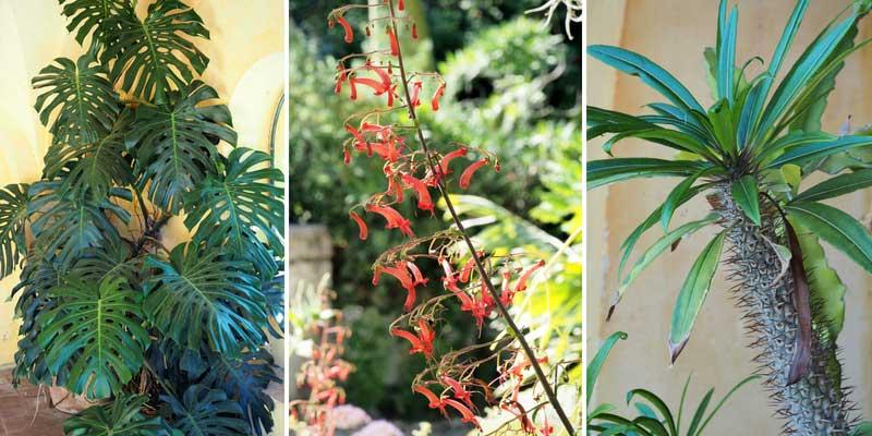 La végétation à proximité de la villa, au jardin du Val Rahmeh