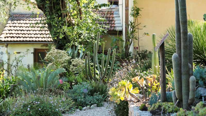 Rocailles de plantes xérophytes, au jardin du Val Rahmeh