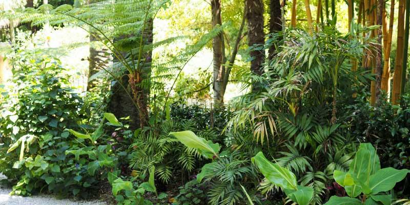 la végétation luxuriante du jardin du Val Rahmeh