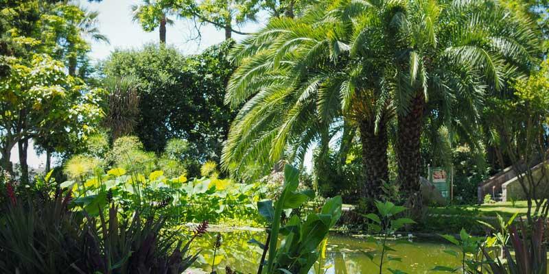 Le bassin au jardin du Val Rahmeh, avec plantes aquatiques et palmiers
